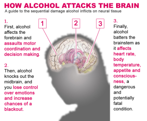 Alcohol & the Brain